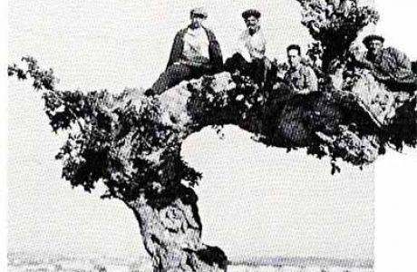 עץ השקמים העתיק